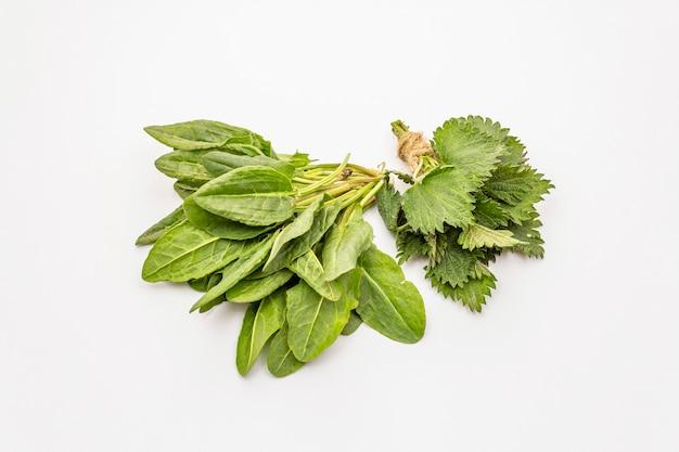 Acetosa verde fresca ed ortica isolate su fondo bianco