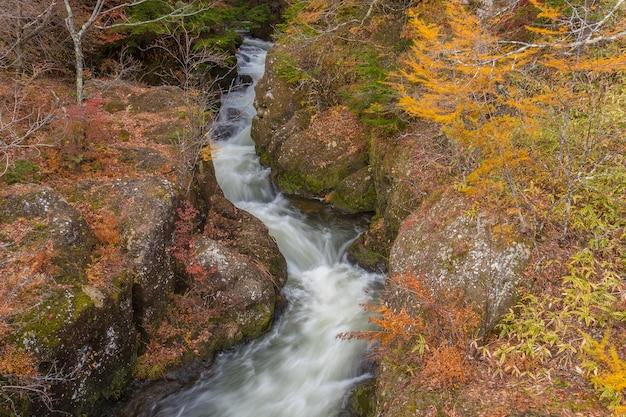Acqua di ruscello che scorre veloce nella foresta di autunno, incredibile paesaggio colorato.