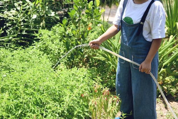 Acqua di versamento di giardinaggio della tenuta della mano della donna sulla pianta con il giardino di gomma del tubo