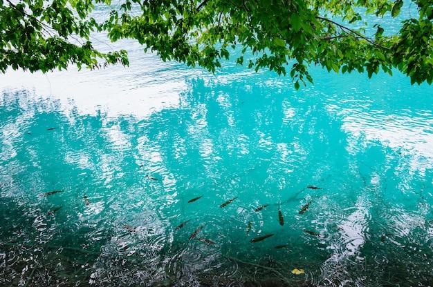 Acqua limpida dei laghi di plitvice, croazia