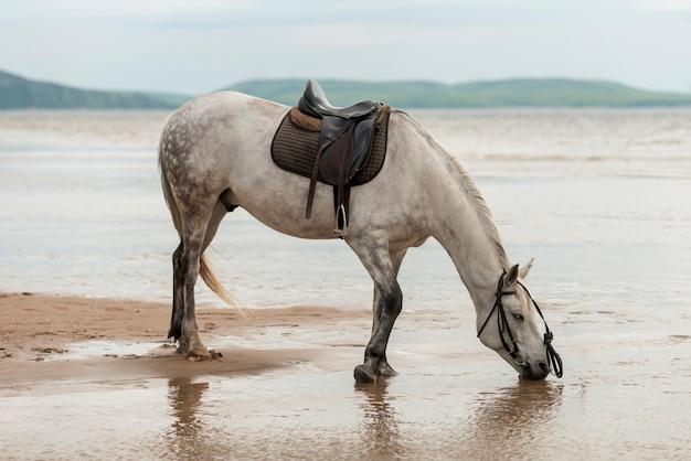 Acqua potabile del cavallo sulla spiaggia