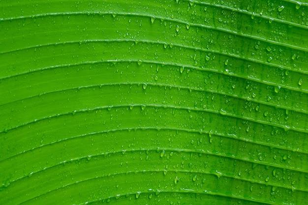 Acqua sullo sfondo di lasciare, foglia verde, sullo sfondo della natura