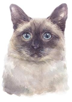 Acquarello di gatto pelo corto siamese