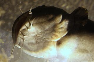 Acquario di atlanta, acquario