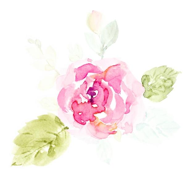 Acquerello sveglio dei fiori di rosa rosa dipinto a mano su bianco.
