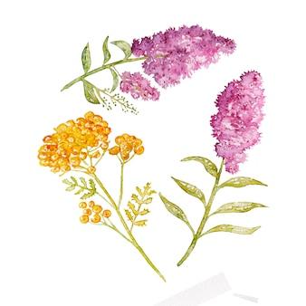 Acquerello viola, fiori gialli isolati.