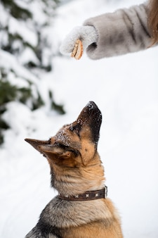 Addestramento del cane da pastore tedesco