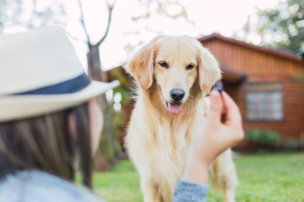 Adorabile animale domestico in giardino. donna con il suo animale domestico all'aperto. labrador retriever.