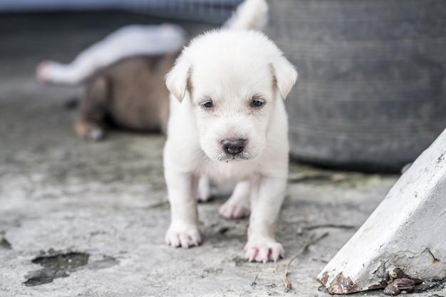 Adorabile cucciolo che gioca all'aperto