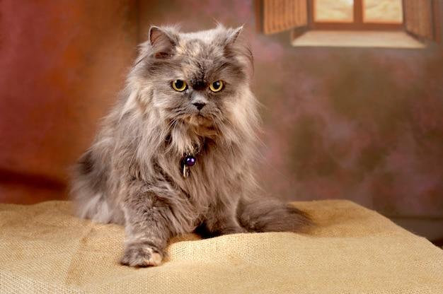 Adorabile soffice gatto fulvo