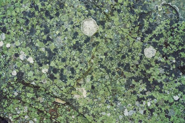 Aereo del masso multicolore nella macro. bella fine della superficie della roccia in su. pietra strutturata colorata. incredibile sfondo dettagliato di masso altopiani con muschi e licheni. texture naturale di montagna.