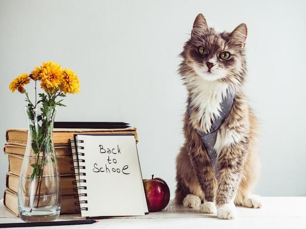 Affascinante, grigio, soffice gattino e libri vintage