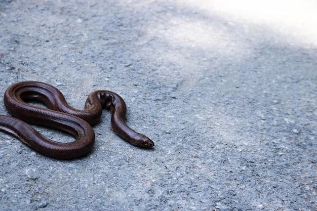 Africa rettile conservazione serpente animale