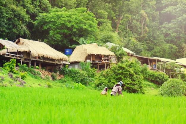 Agricoltore che lavora nel campo di riso