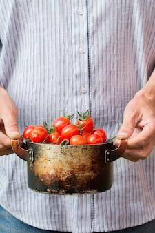 Agricoltore che tiene i pomodori ciliegia freschi. raccolta delle verdure
