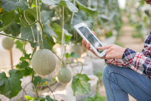 Agricoltore con tavoletta per lavorare orto idroponico organico in serra. agricoltura intelligente, fattoria, concetto di tecnologia dei sensori. mano del coltivatore facendo uso della compressa per il controllo della temperatura.