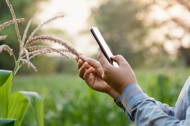 Agricoltore della donna che utilizza tecnologia mobile nel campo di grano
