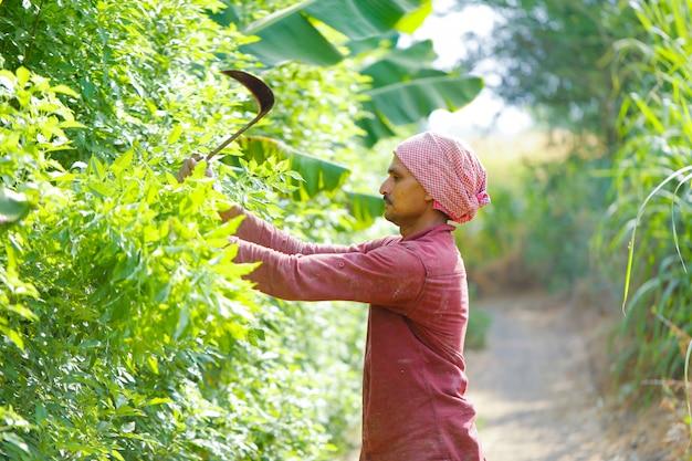 Agricoltore indiano con falce nel suo campo