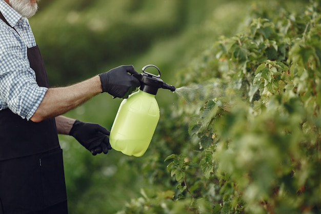 Agricoltore la spruzzatura di verdure in giardino con erbicidi. uomo con un grembiule nero.