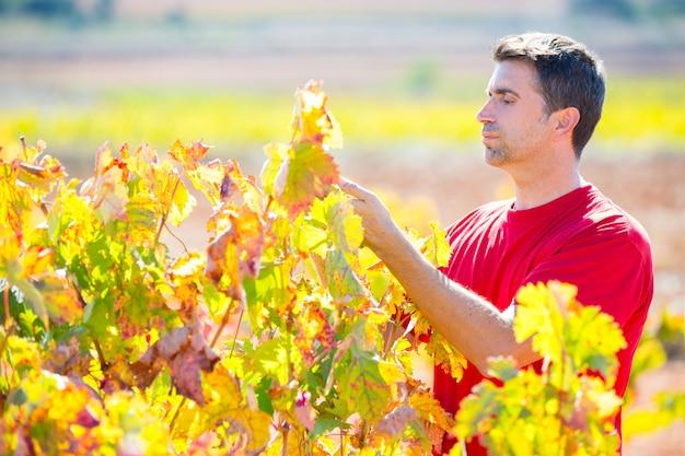 Agricoltore mediterraneo della vigna che controlla le foglie dell'uva