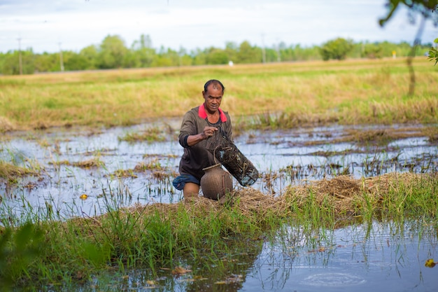 Agricoltore stile di vita tailandese. gli agricoltori tailandesi sono una trappola per i pesci nelle risaie.