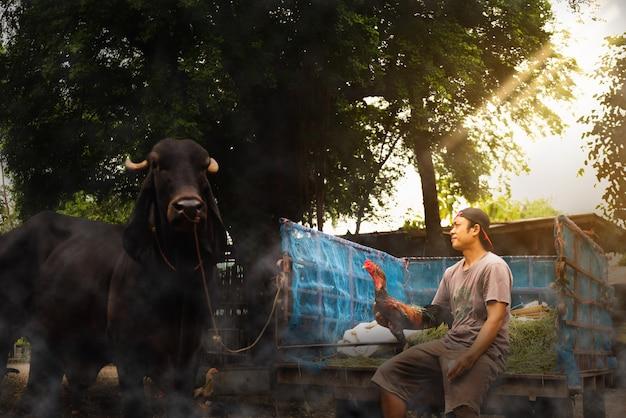 Agricoltore tailandese che tiene e che pulisce un pollo, stile di vita sano della gente nel concetto asiatico