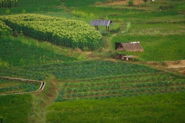 Agricoltura del sud-est asiatico, coltivazione nel nord della thailandia