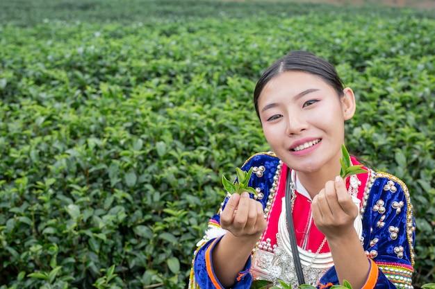 Agricoltura delle donne hilltribe