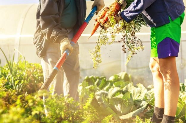 Agricoltura due persone giovani adolescente e uomo anziano in abiti da lavoro