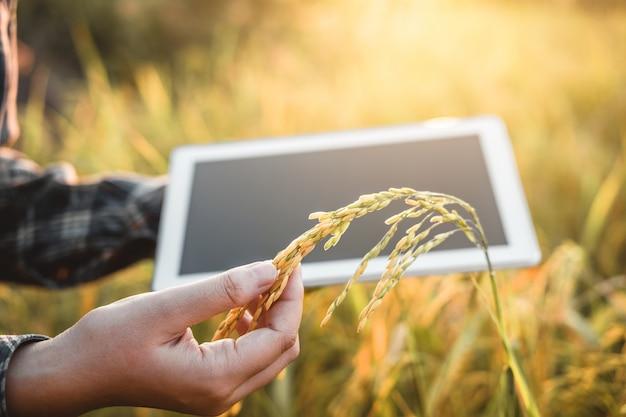 Agricoltura intelligente tecnologia agricola e agricoltura biologica donna che usa la ricerca