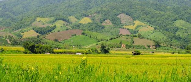 Agricoltura nelle zone rurali
