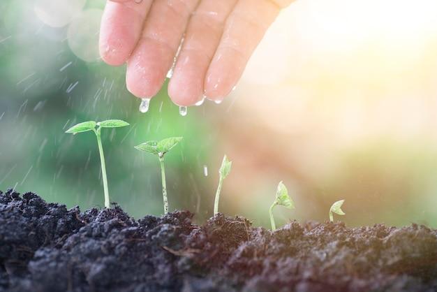 Agricoltura o agricoltore e nuova vita di partenza concept.farmer mano segatura piantagione di semi