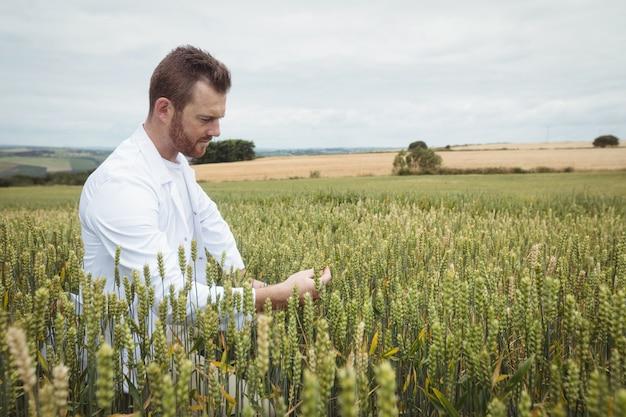 Agronomo che controlla le colture nel campo