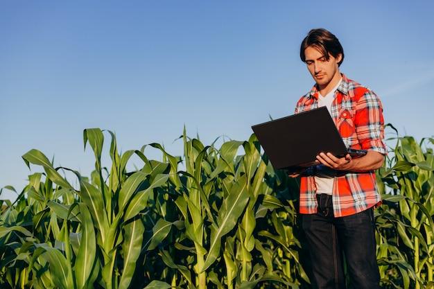 Agronomo che sta in un computer portatile della tenuta del campo di mais e che osserva attentamente nello schermo