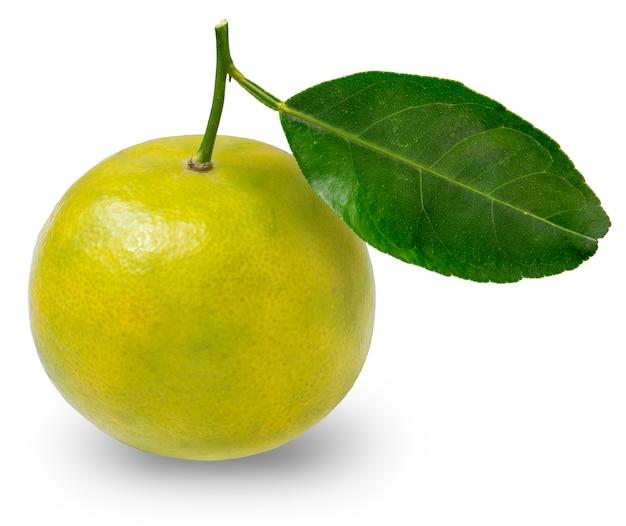 Agrumi freschi del mandarino su bianco, arancio del mandarino isolato su bianco con il percorso di residuo della potatura meccanica.
