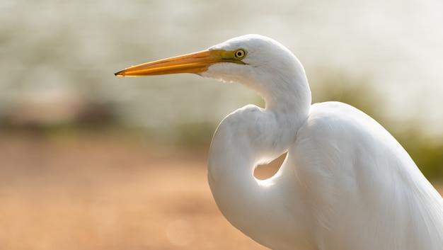 Airone bianco al parco brasiliano