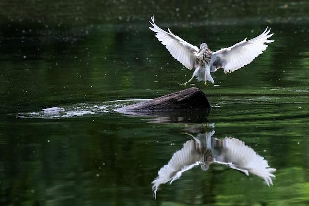 Airone uccello che mangia pesce