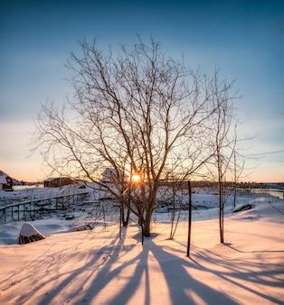Alba attraverso l'albero secco con ombra su nevoso
