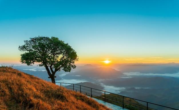 Alba in montagna al punto di vista. singoli grandi alberi e campi in erba e passerelle in acciaio.