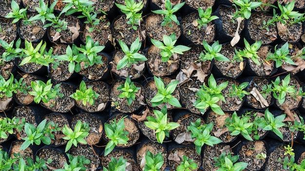 Alberello che cresce in un terreno, vista dall'alto.