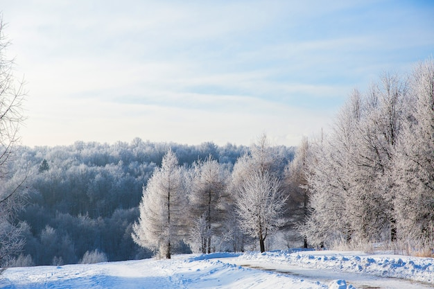 Alberi bianchi nevosi nella foresta invernale e chiaro cielo blu. bel paesaggio