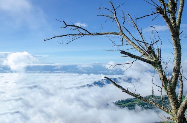 Alberi con sfondo di montagna e il cielo