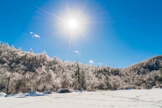 Alberi congelati in inverno con cielo blu