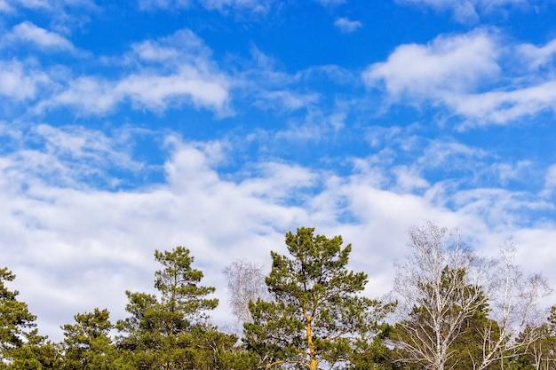 Alberi contro il cielo blu e nuvole