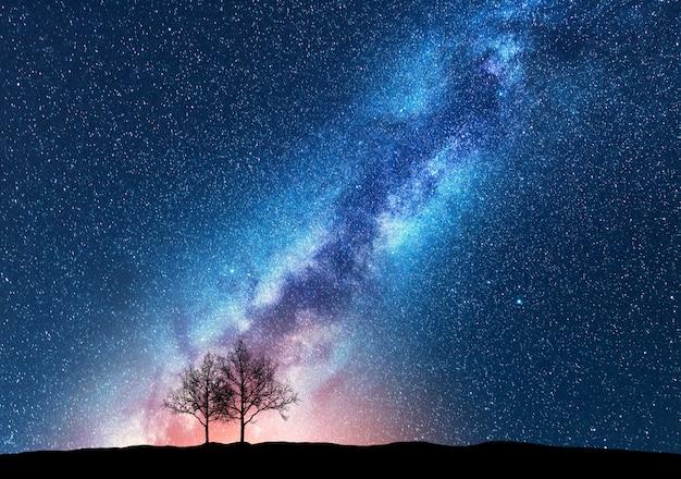 Alberi contro il cielo stellato con la via lattea