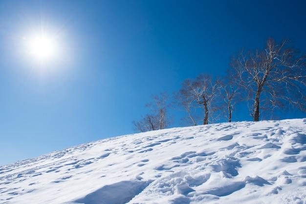 Alberi coperti di brina e neve in montagna, concetto di sfondo invernale.