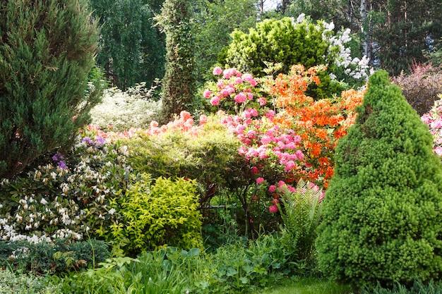 Alberi decorativi, arbusti e fiori in giardino: abete rosso, arborvitae