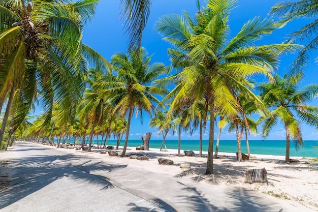 Alberi del cocco sulla spiaggia sabbiosa e sul cielo blu bianchi nel sud della tailandia