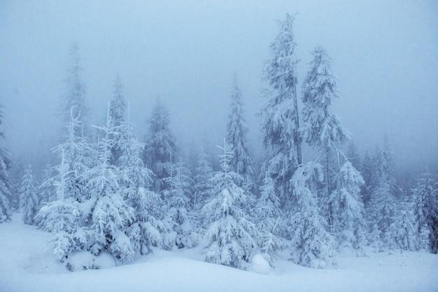 Alberi del paesaggio di inverno in gelo e nebbia