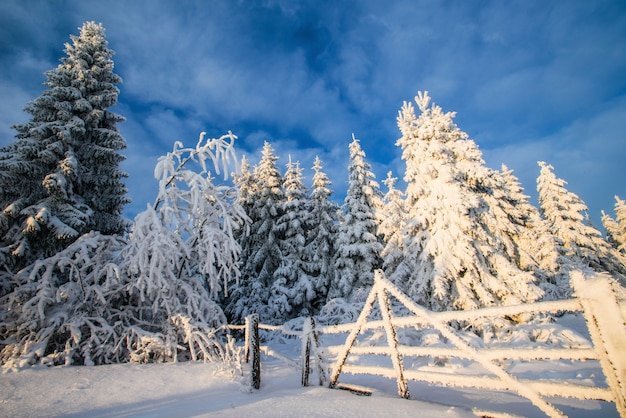 Alberi del paesaggio invernale in neve